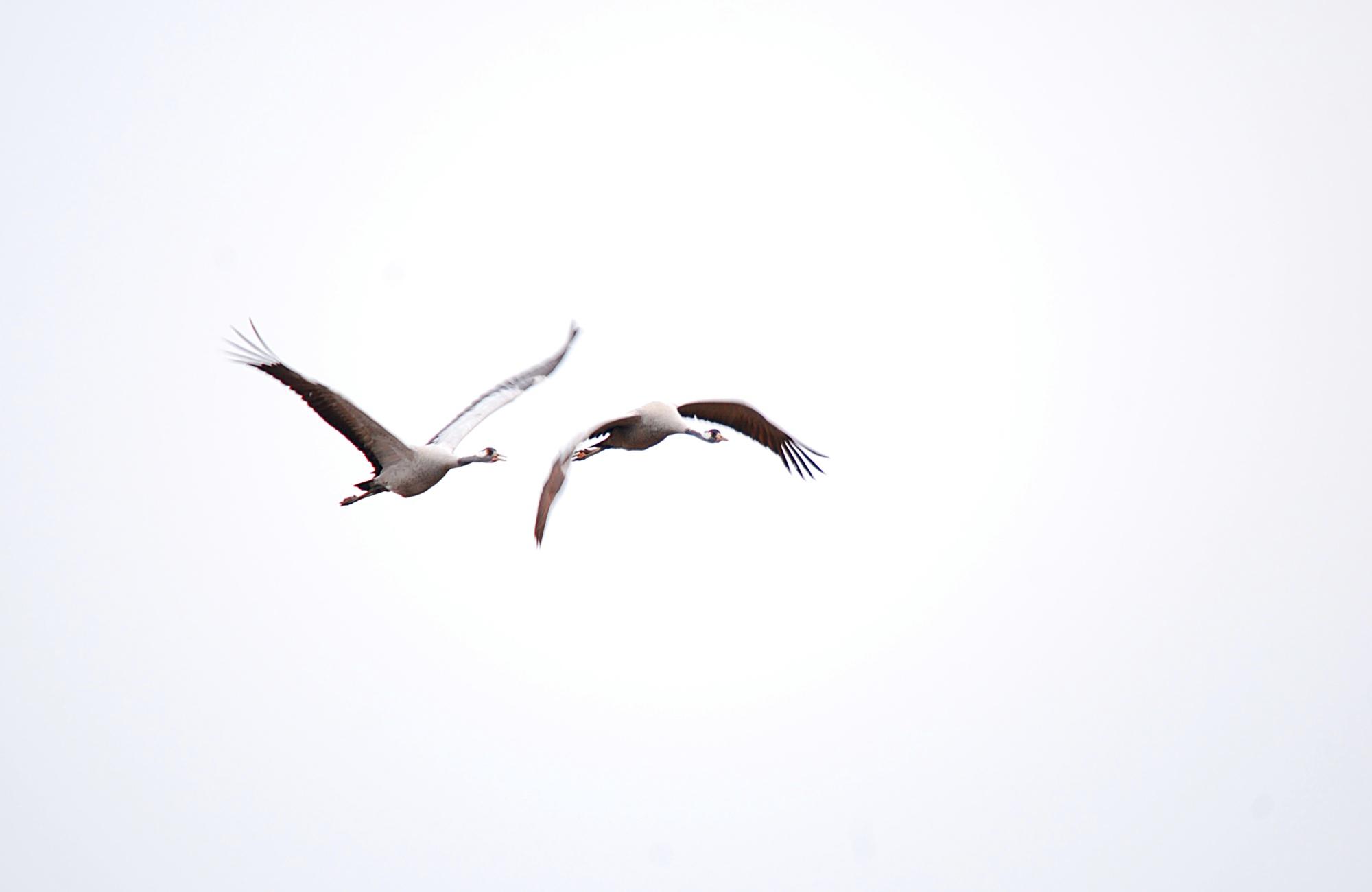 flyger